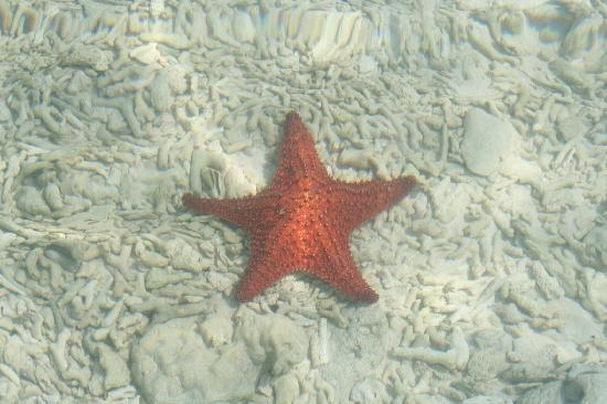 Tide Tours - Day Tours: starfish everywhere