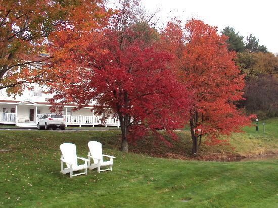 BEST WESTERN Freeport Inn: Beautiful Fall Trees