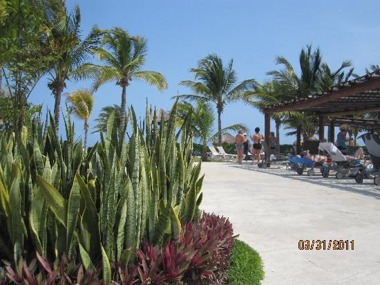 BlueBay Grand Esmeralda: Entrance to the buffet by the big pool.