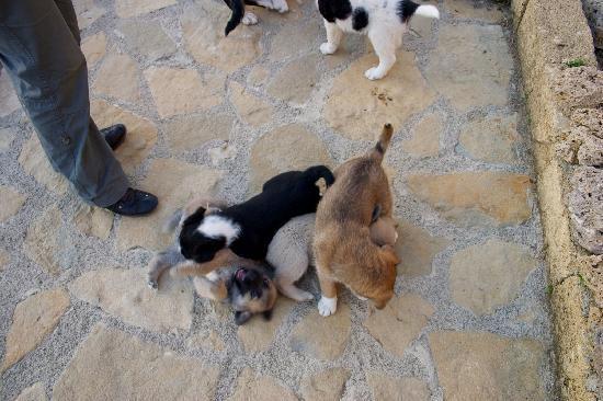 Agriturismo Masseria La Chiusa : una cucciolata