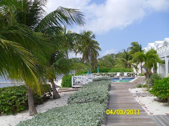 Conch Club Condominiums: view of one of the pools