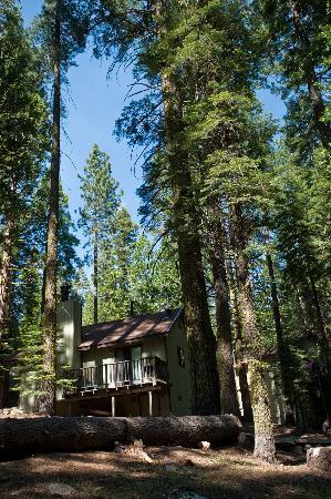 Pinecrest Chalet: Cabin