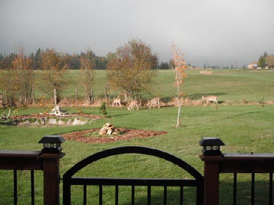 Brouse Creek B&B: Visitors in the morning
