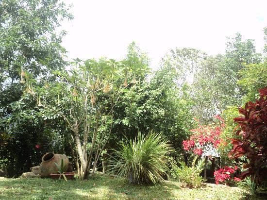 Hospedaje Girasoles: Der Garten