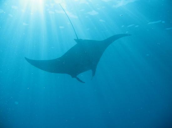Makena Coast Dive Charters: Our best picture yet