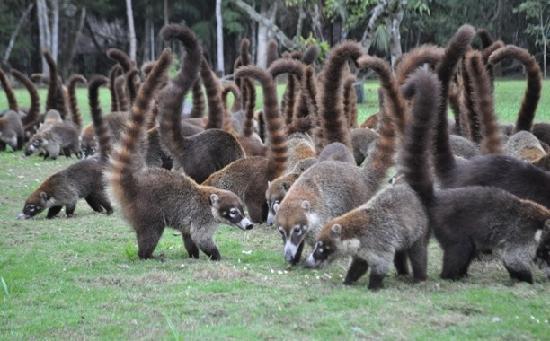 Hotel Tikal Inn: wildlife