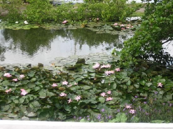 Auberge Seraphine: Water Lilies