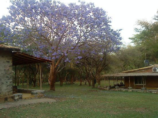 Jungle Hut: The Lovely Lavendar flower tree with Deer grazing in the background..