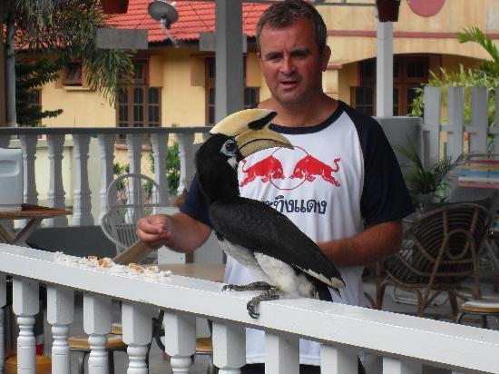 Nipah Guesthouse: Hornbill breakfast guest