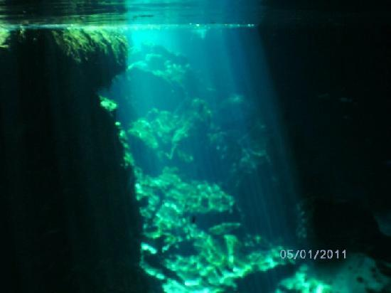 Halocline Diving: Cenote Chac Mool & Kukulcan