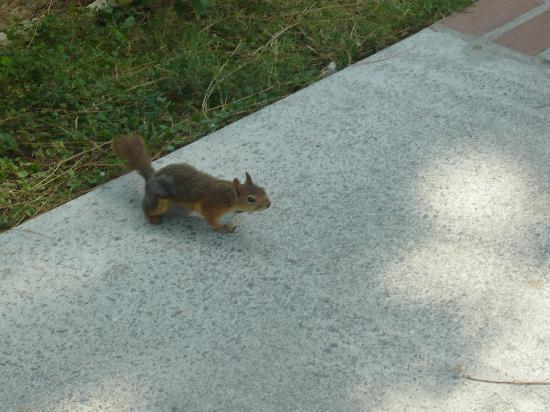 Kustur Club Holiday Village : Un des nombreux écureuils