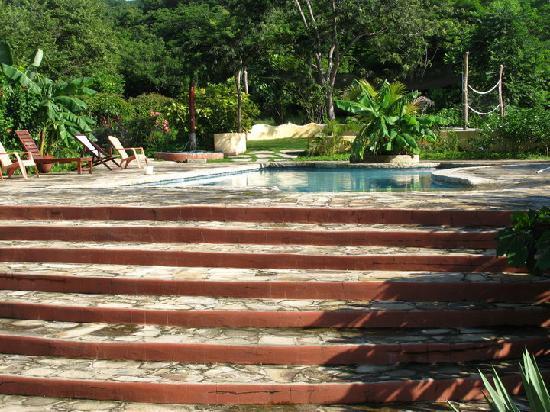 Mango Rosa Nicaragua Picture