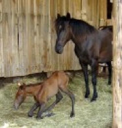 Meramec Farm: New foal