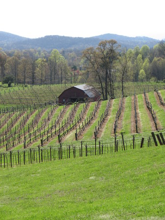 Dahlonega, Georgien: Vineyard