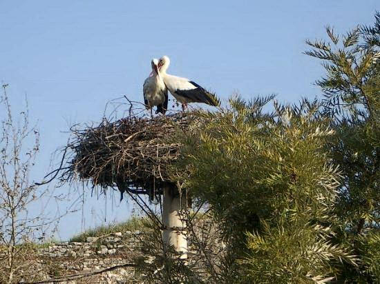 Hotel Bella: Our resident Storks (Mar-Aug)