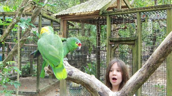 "Butterfly Gardens : ""Hola"" parrot"