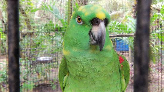 Butterfly Gardens: Parrot in a cage