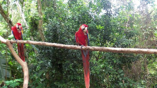 Butterfly Gardens : Macaws