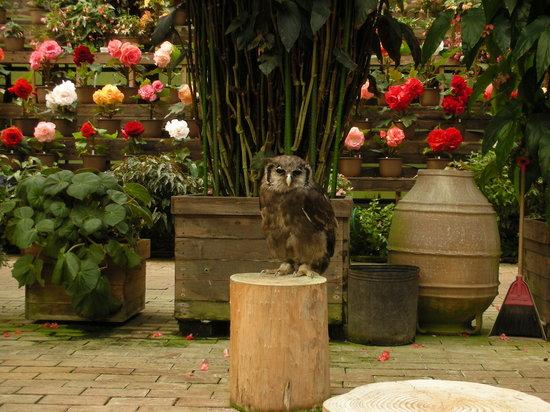 Fujinomiya, Japonya: フクロウと花