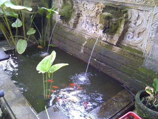 Fish pond picture of puri garden hotel restaurant for Fish pond images