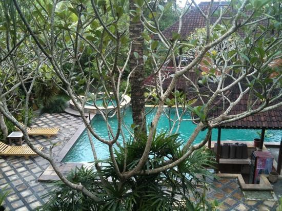 Ubud Bungalow : swimming pool
