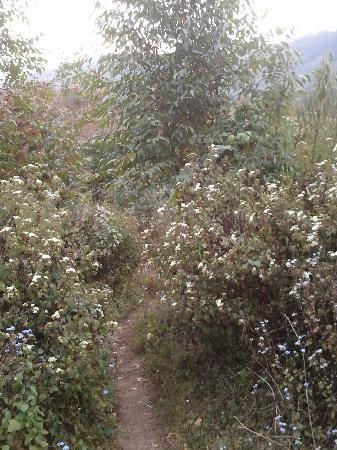 Camp Noel: trek through the flowers