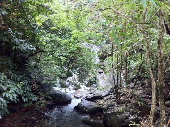 Vythiri Resort: stream