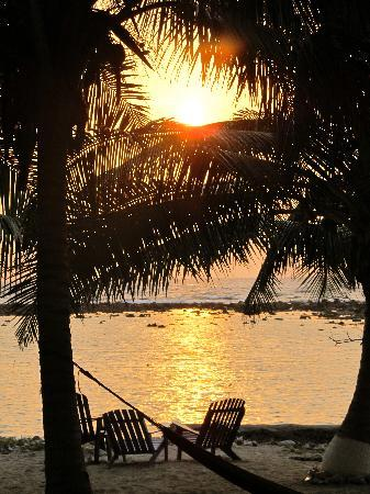 Tobacco Caye Lodge: sunrise view from our porch through the palm grove