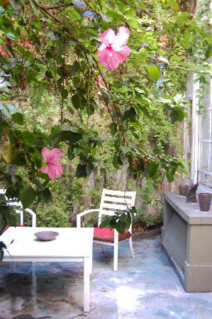 Jacaranda, studio & suite: garden suite patio
