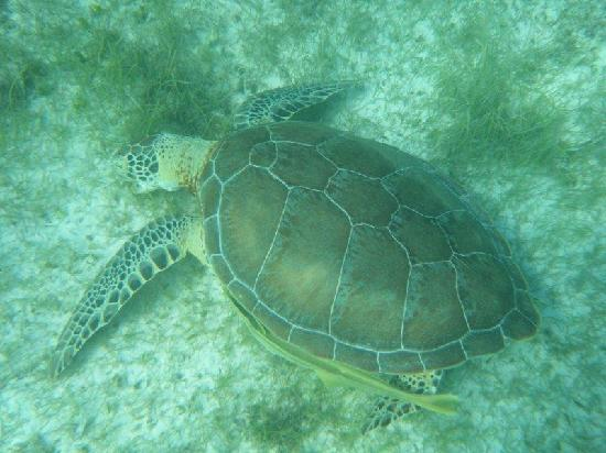 Hotel Akumal Caribe: Snorkeling delights