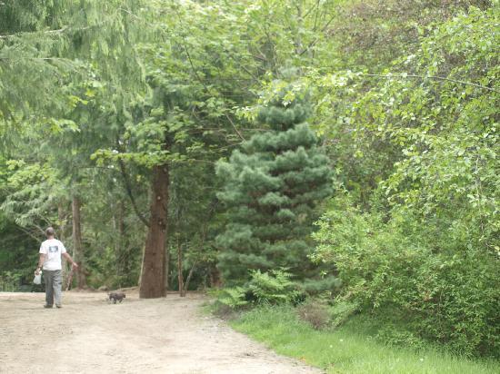 Chemainus Gardens: Pet Friendly