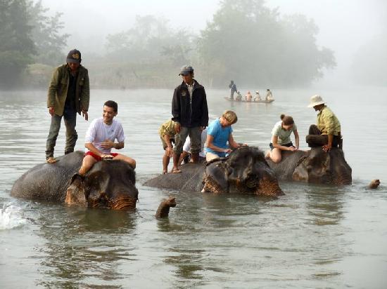 Ban Xieng Lom, Laos: Bathing the elephants in the Nam Khan