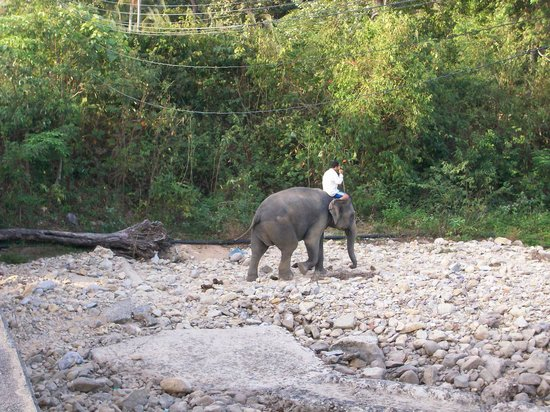 Koh Chang, Tajlandia:                   Taking elephant for a walk Klong Prao