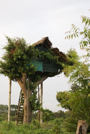 Yala National Park, Sri Lanka: Treetop house