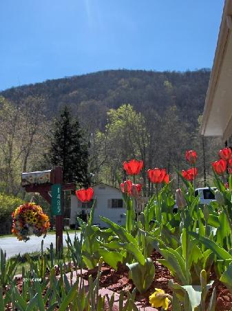 Alamo Motel & Cottages: Tulips & a View of The Mountain at The Alamo Motel and Cottages