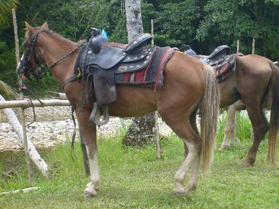 Rancho Veragua : The beautiful horse I rode