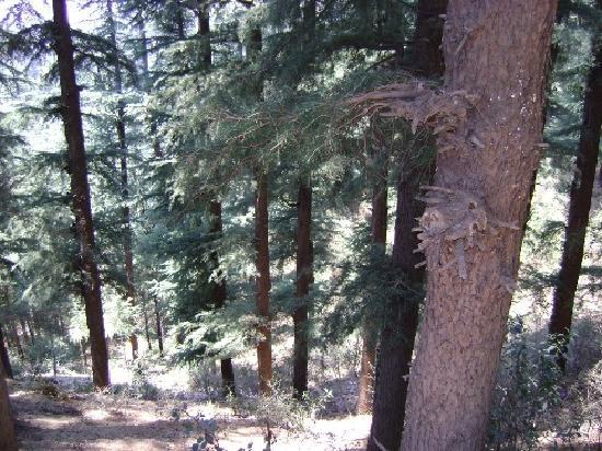 The Chalets Naldehra: Woods
