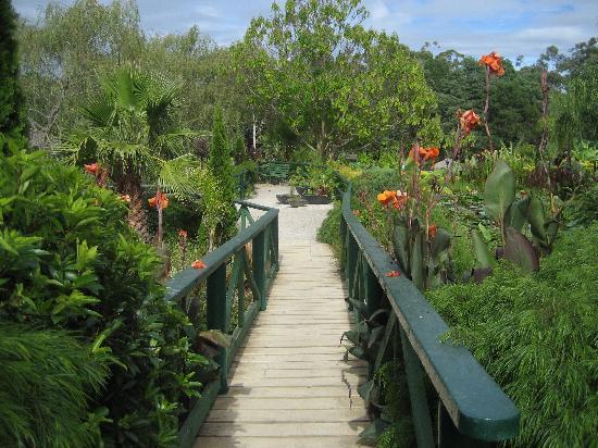 Deloraine Homestead: Blue lotus watergarden