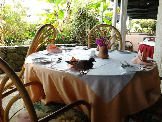 Mount Irvine Bay Hotel & Golf Club: Friendly bird visitor at breakfast