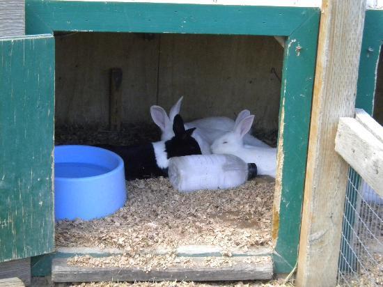 ZooMontana: barn yard bunny hutch
