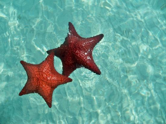 Great Exuma: STARFISH BAY