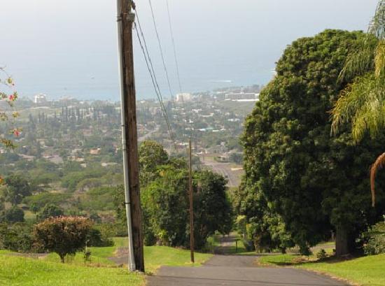 UCC Hawaii Kona Coffee Estate: 園内から眼下を望む