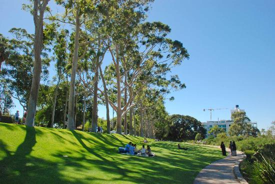 Kings Park & Botanic Garden: Picnic anyone?