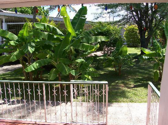 Golden Thistle Hotel: Our Tropical Garden