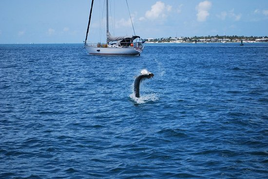 Pepe's Charters: Tarpon Fight, Jumping out of the water
