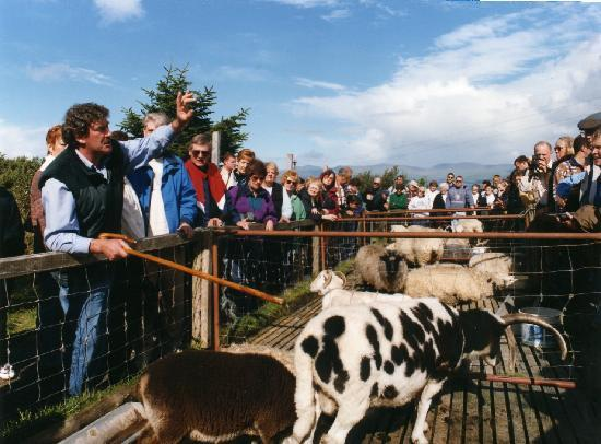 Wild Kerry Day Tours Reviews
