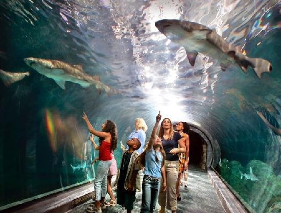 Visit Adventure Aquarium's 40 foot shark tunnel