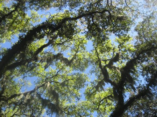 Little Talbot Island State Park : canopy over the campsite