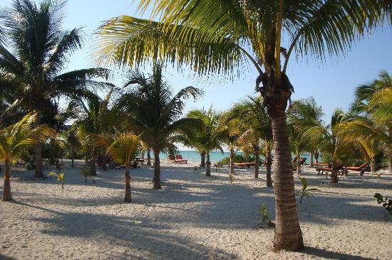 Zomay Hotel Holbox: plage