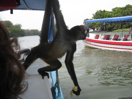 Granada, Nicarágua: monkey on the isleta tour